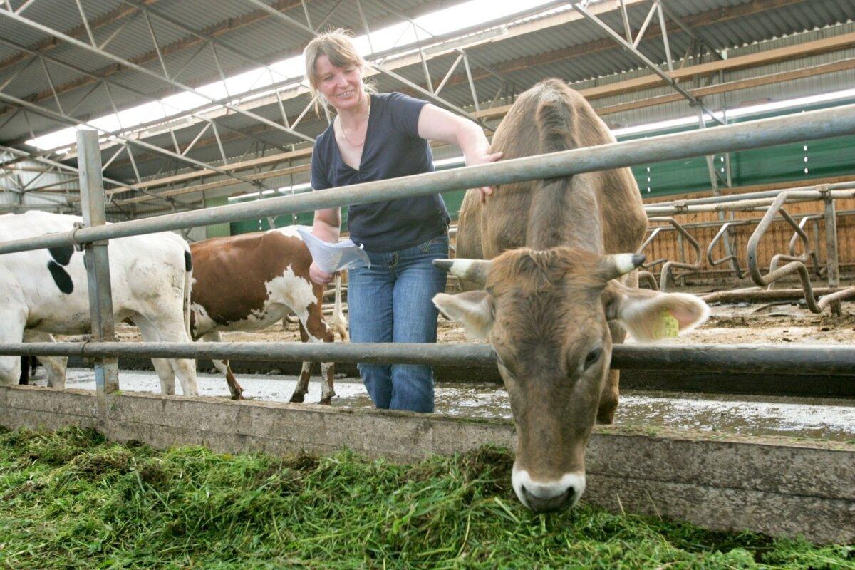 Pildil on Anne Kullamägi 2007. aastal toona valminud uues noorkarjalaudas. Nüüd oleks ta õnnelik, kui saaks kõik oma viimased lehmad müüa elusloomadeks.