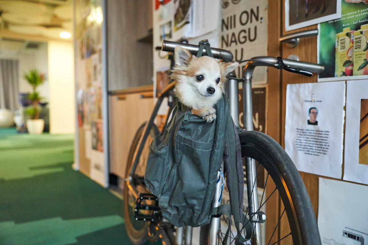 Rattaga sõites on Nuuki Imaril seljakotiga seljas.