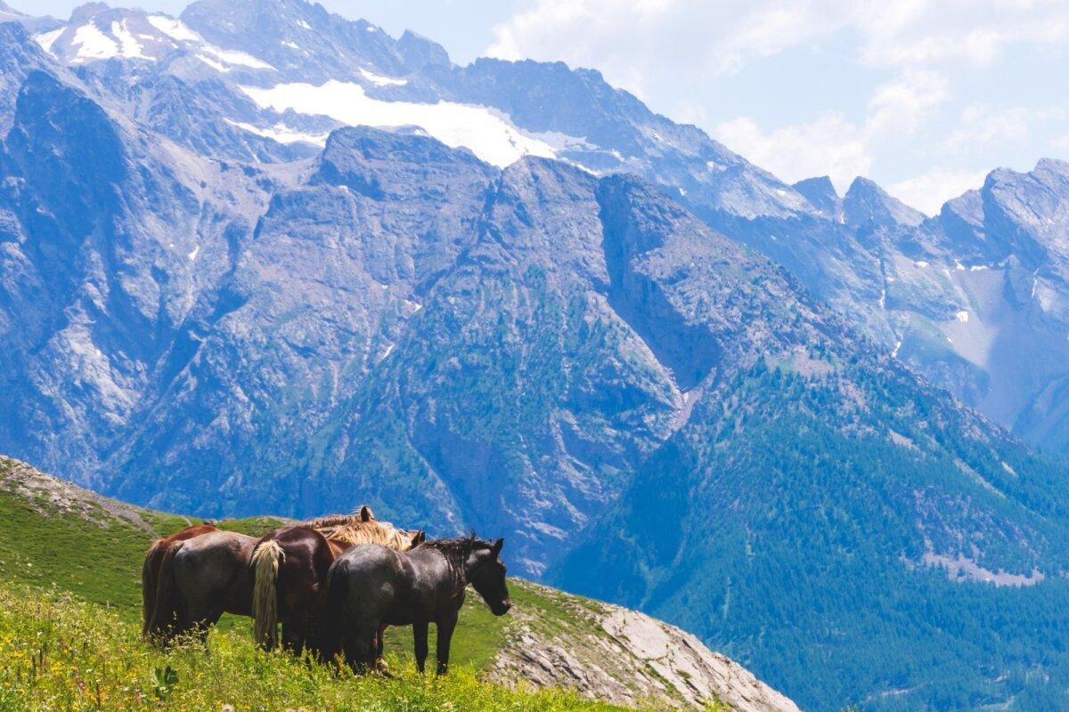Alpid