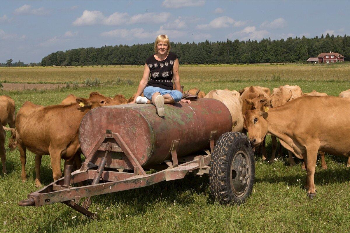 """""""Maatõugu lehmad on meil hästi hoitud, poputame neid kui lemmikloomi,""""ütleb parim maakarjakasvataja Reet Loorits."""