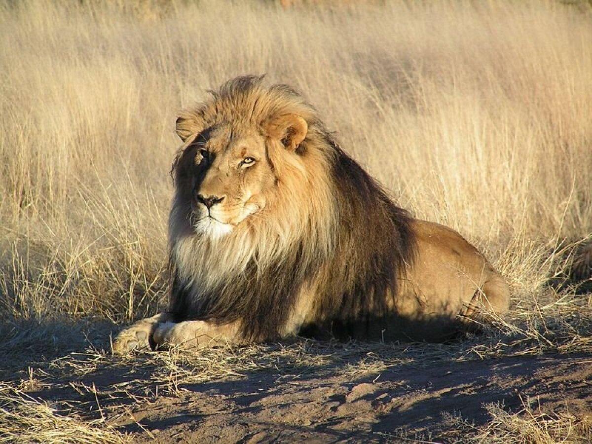 Foto: Wikimedia Commons, kasutaja Kevin Pluck
