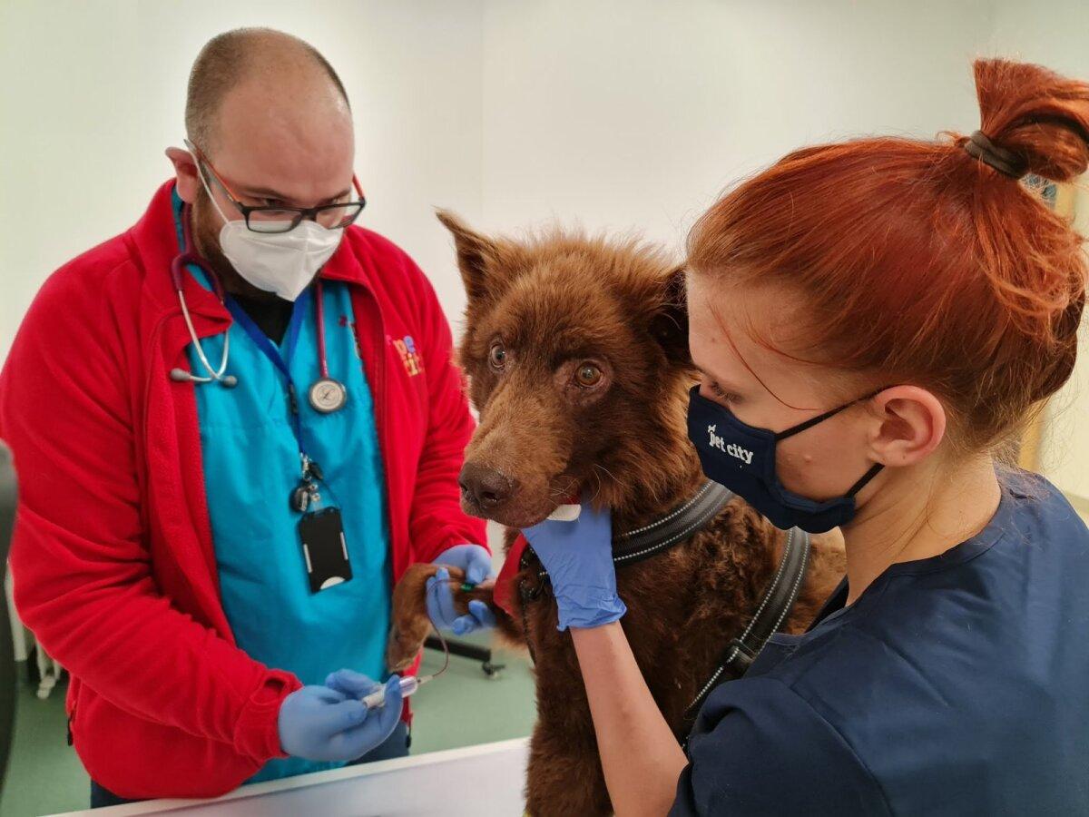 Setumaalt päästetud koer loomakliinikus