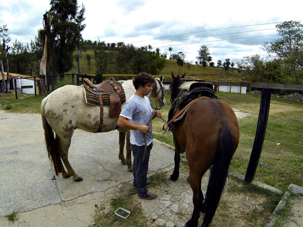 Hobused maakodus.