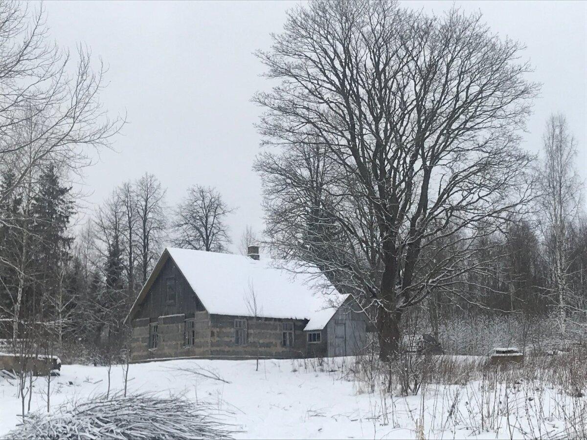 MAJAKE METSA SEES, Läti piiri lähedal.