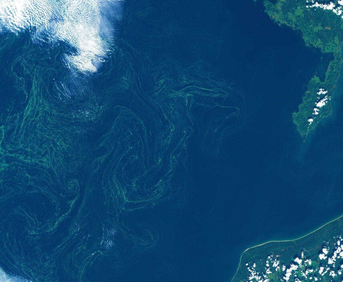 Sinivetikate vohamine augustikuises Läänemeres.