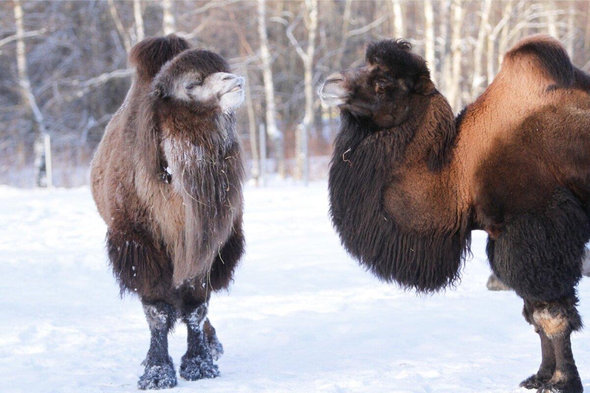 Külm loomaaias.