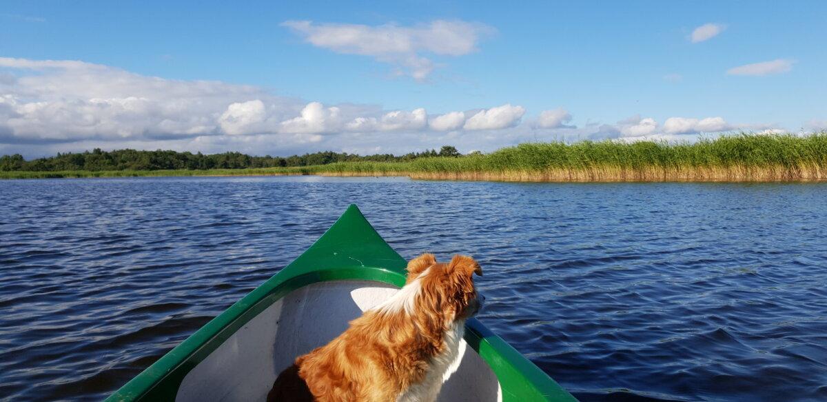 Maailma parim koer - Nemo, paadisõit Mullutu lahel