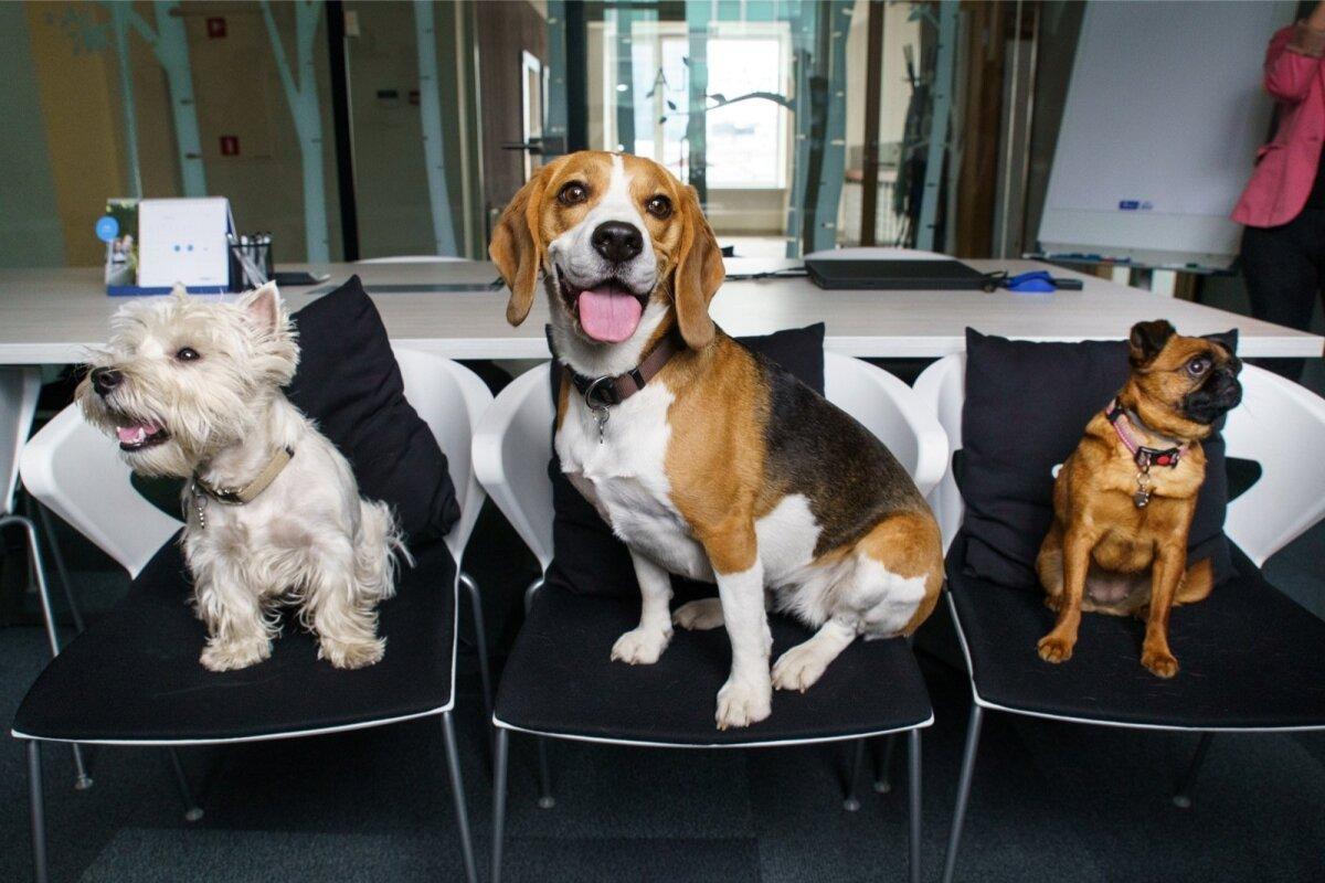 Kõigil koertel on välja kujunenud oma kindel roll.