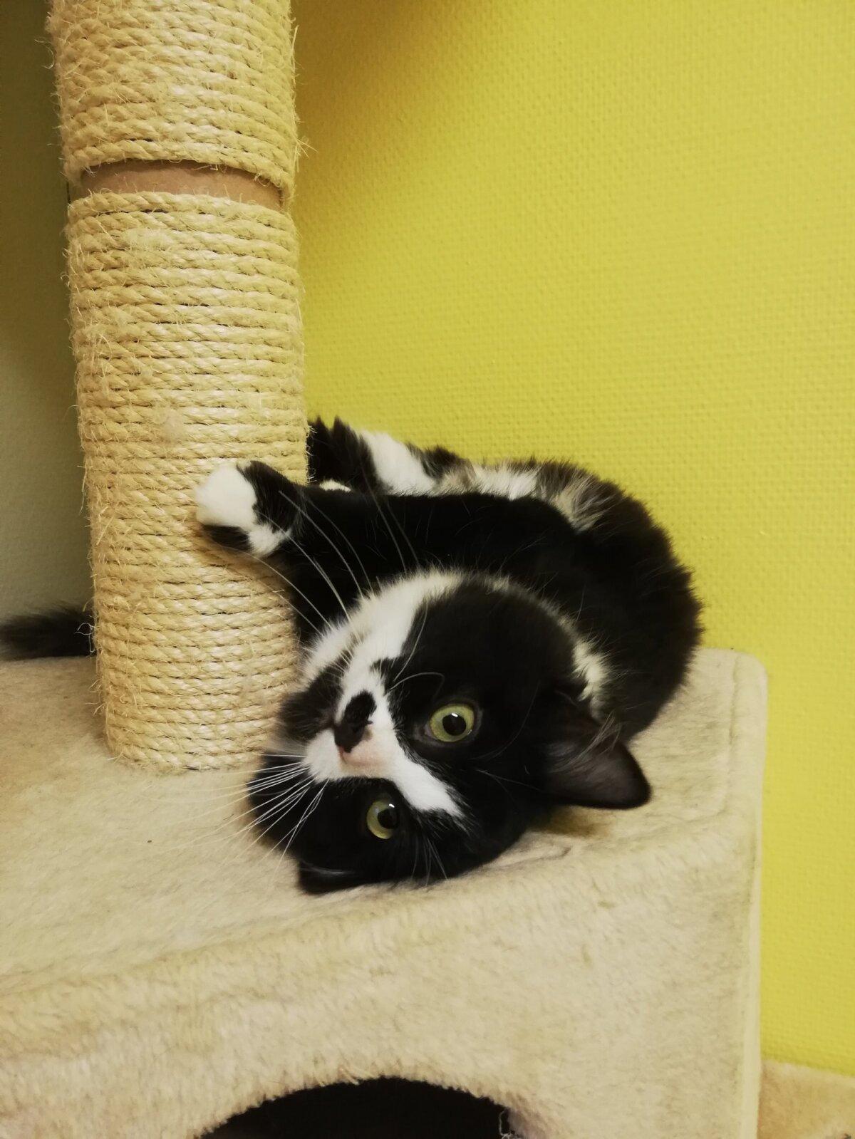 Kodu ootav kass Mustu Mustnina