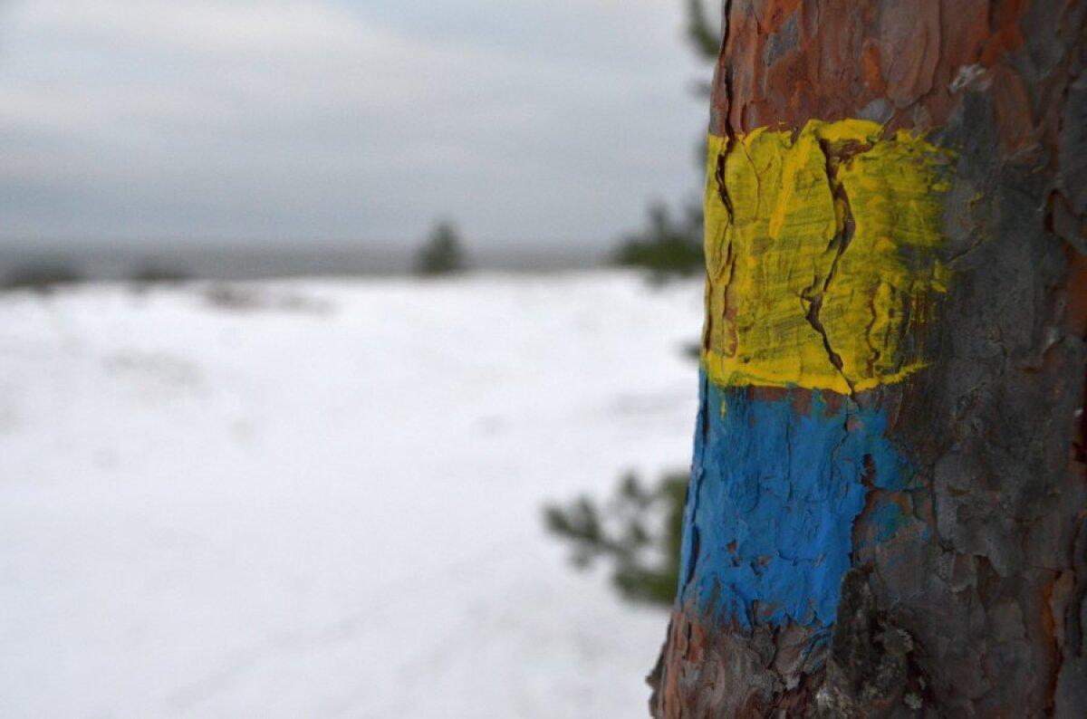 Kõige keerulisem koht: Meremõisa rannas peab leidma selle puu, et liivarannast tagasi metsa keerata.