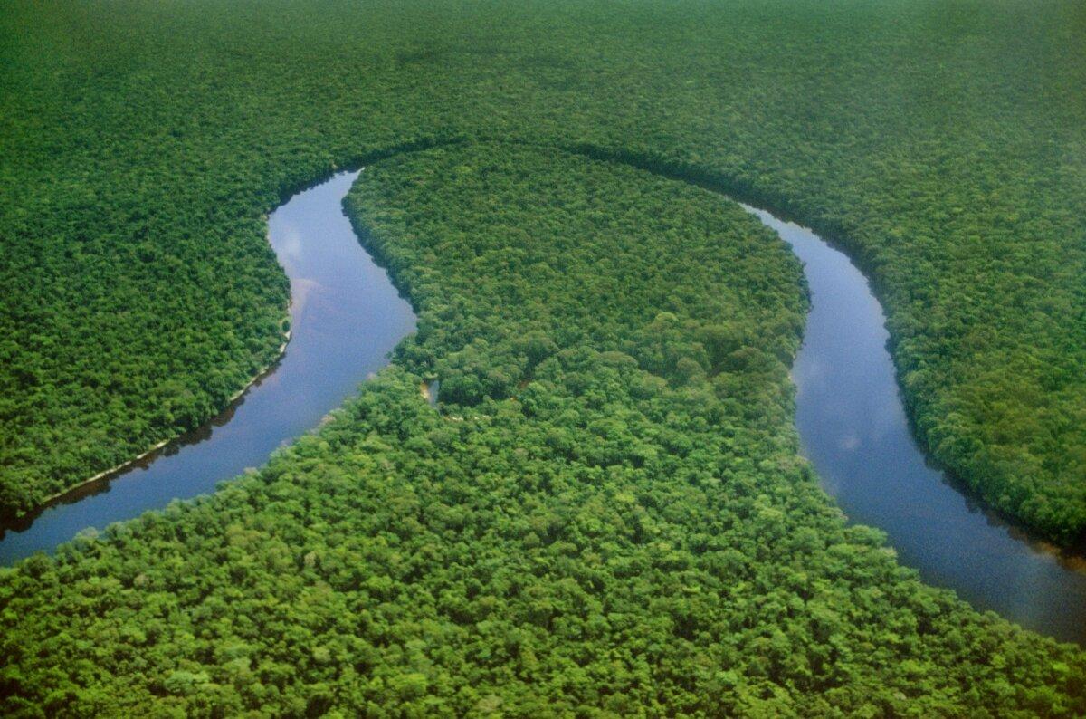 Kongo vihmametsad