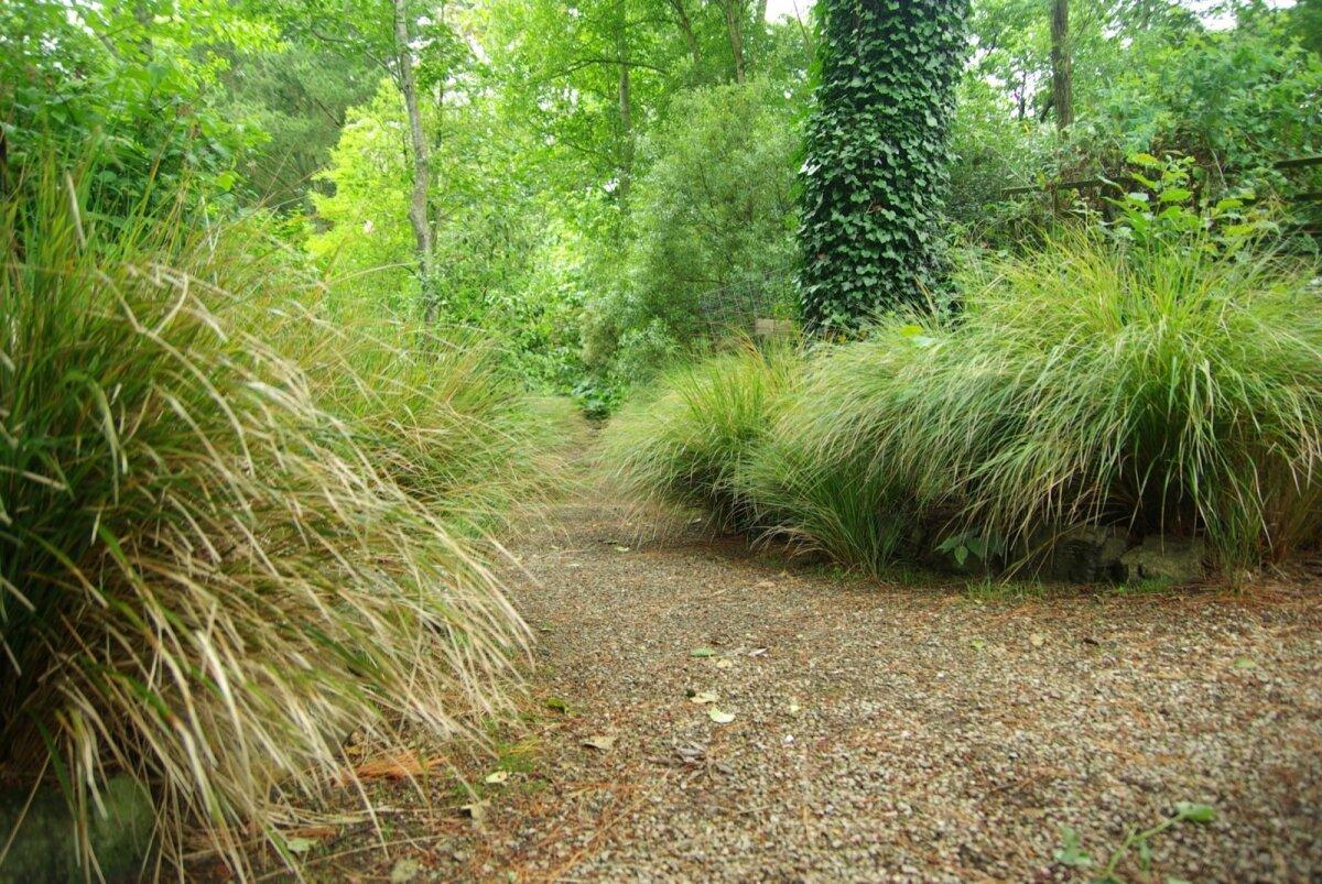 Poolvarjulise metsaaia või aiataguse ülemineku metsaks võib samuti kõrrelistega täita. Sinna sobib hästi <em>Deschampsia cespitosa</em> (luht-kastevars), mis kasvab meelsasti ka poolvarjus ja veidi kuivemas mullas.