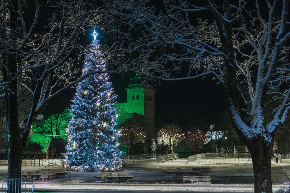 Jõulukuusk - Viljandi