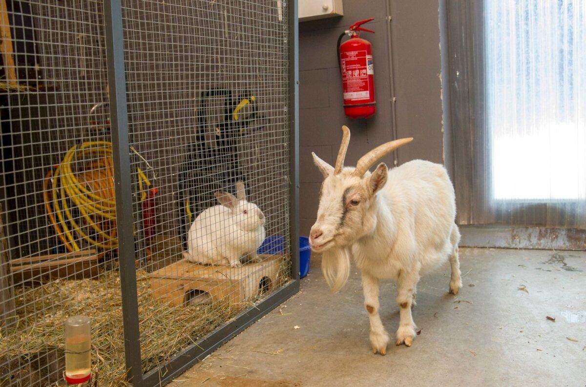 TEGIJA TEGITA: inspekteerib teiste laste loomaaia asukate eluolu.