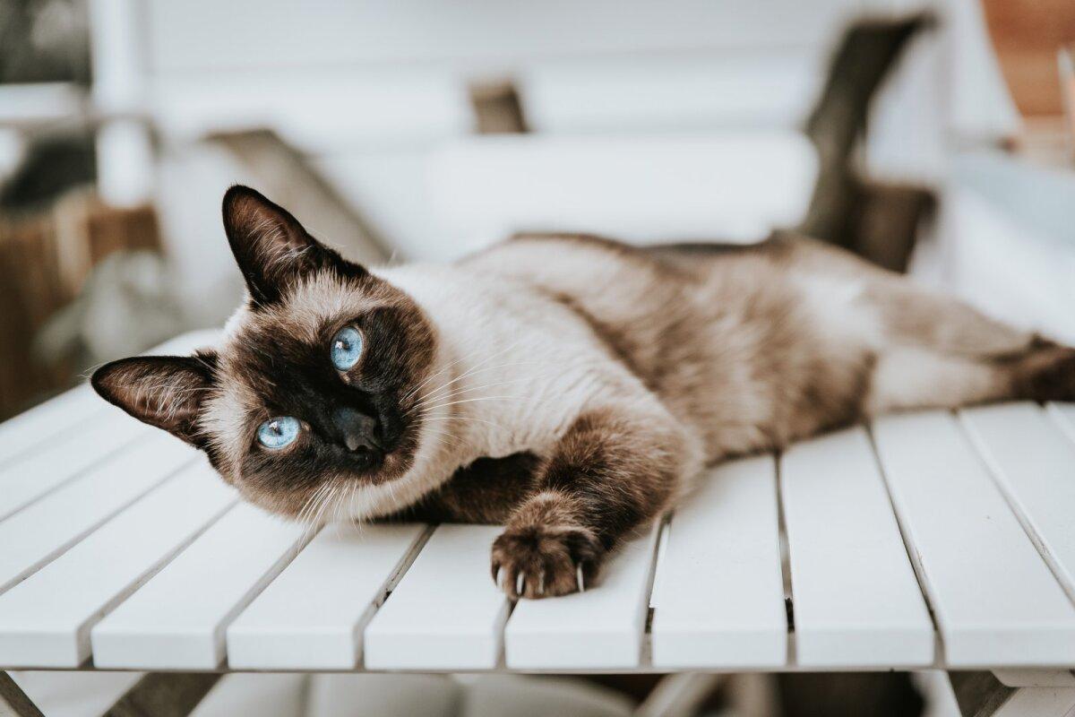 Kass on ronijaloom ja soovib ülevalt jälgida, mis toimub