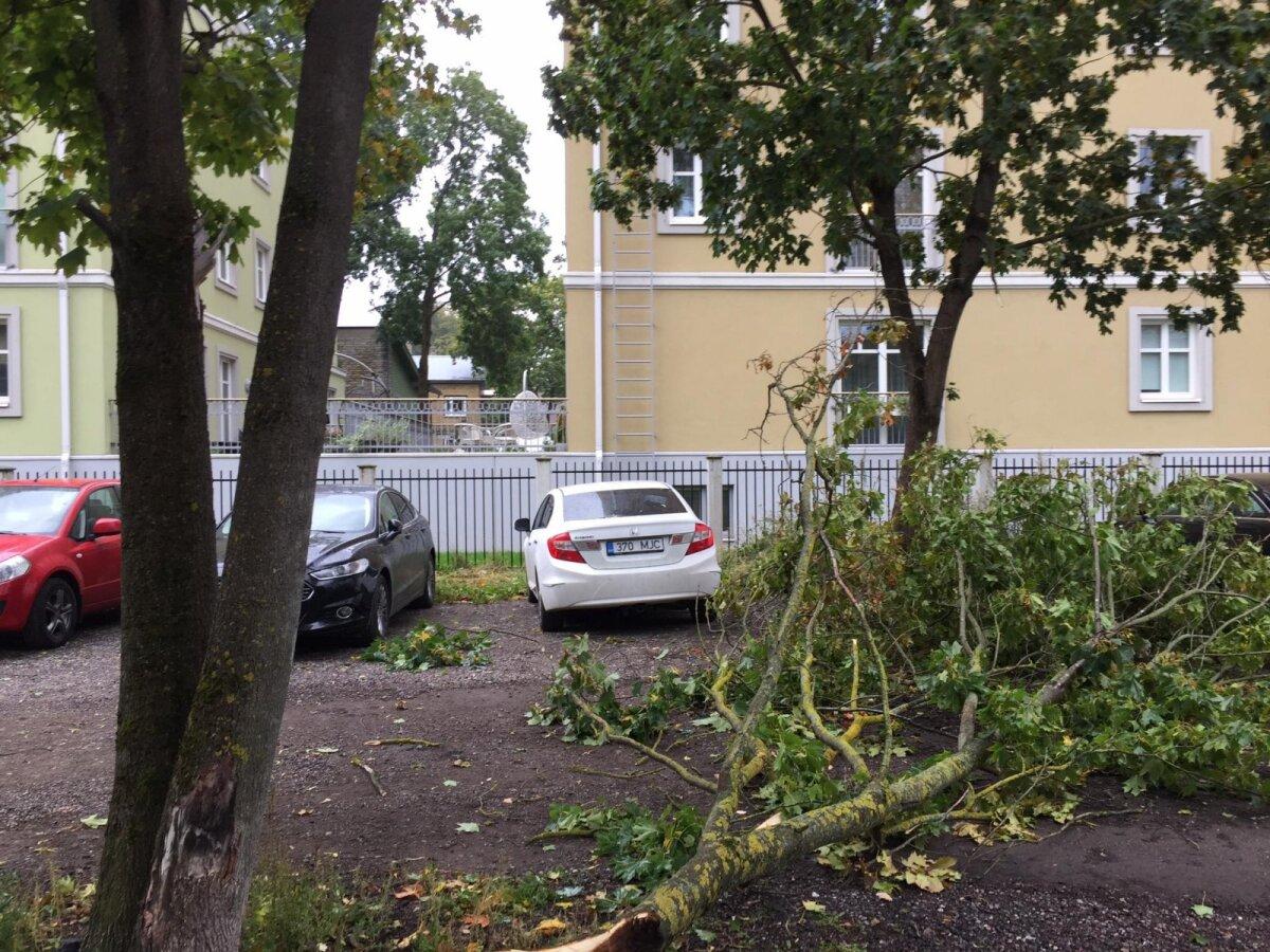 Частная парковка в Кадриорге.
