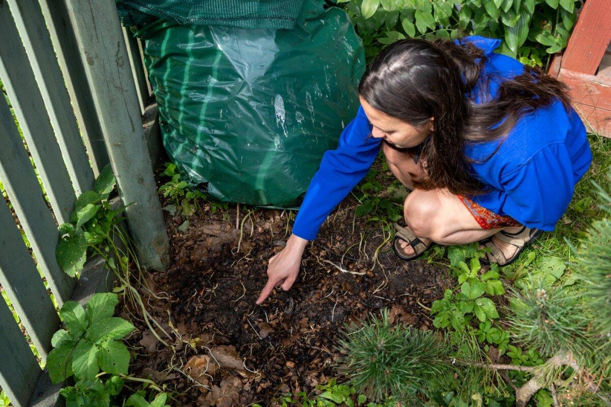Nälkjaid leiab just nimelt niiskematest paikadest. Kristina Kurm avastas koguni viis tükki neist oma kompostihunniku alt. Pildil olevad nälkjad pole lusitaania teeteod - ärge neid tumedaid tegelasi jahtima hakake.
