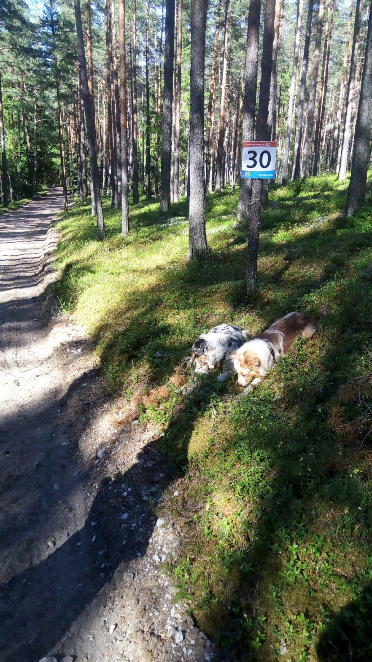 Väsinud matkalised 30. kilomeetril.