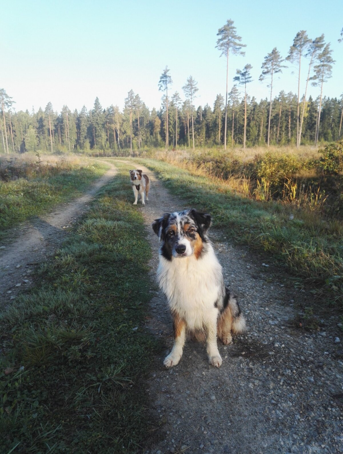 Sandy ja Zoey varahommikusel jalutuskäigul looduses