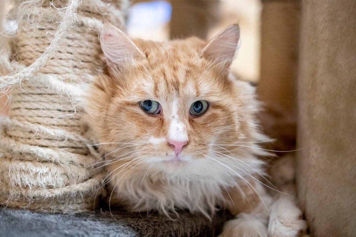 Kass Silvester