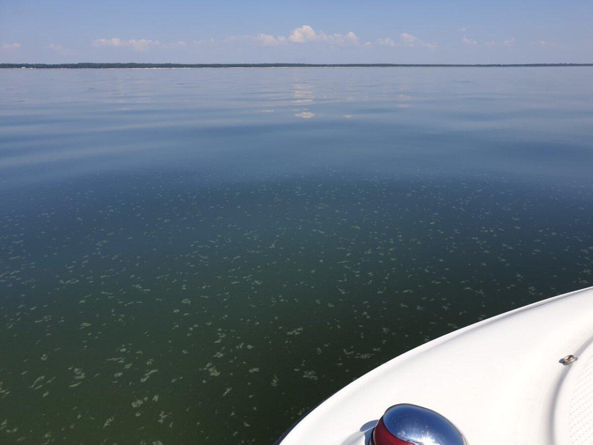 Lugeja foto sinivetikatest Valgerannas ja Pärnu lahes