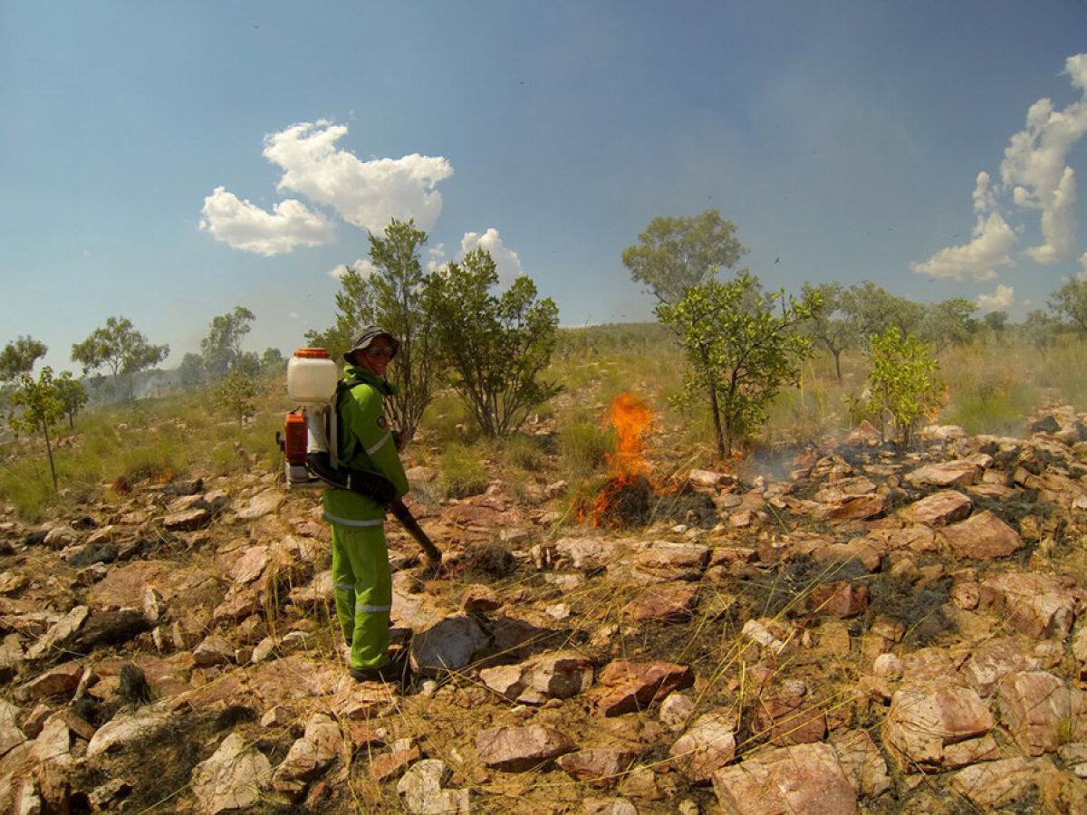 Põõsaste põletamine Kununurras, kaitsmaks haruldase linnuliigi pesituspaika.