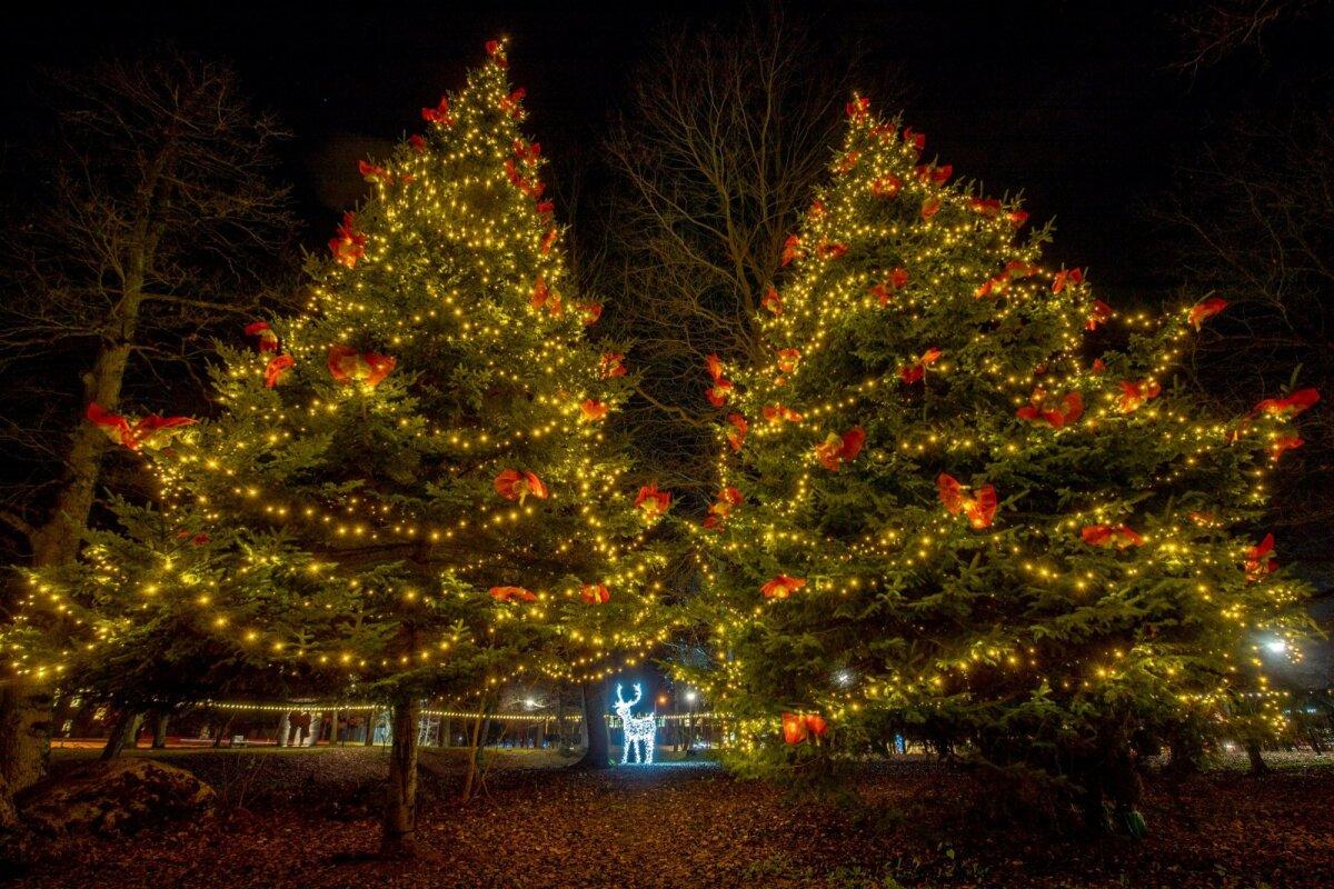 Viimsi jõulupuu Laidoneri pargis