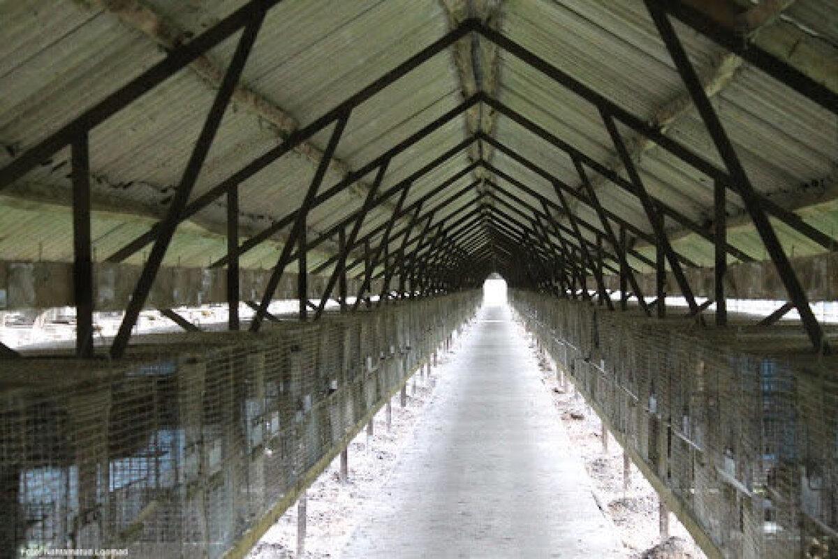 Eesti karusloomafarm