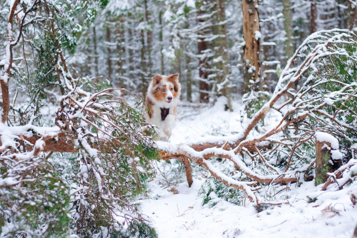 Zoey hüppab üle maha langenud puu.