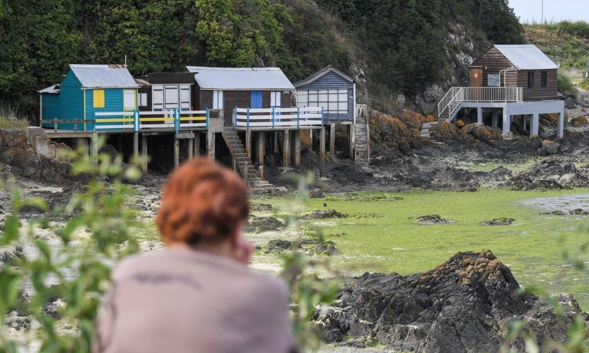 Naine vaatab maju Saint-Brieuc rannal, kuhu minemine on vetikate tõttu võimatu
