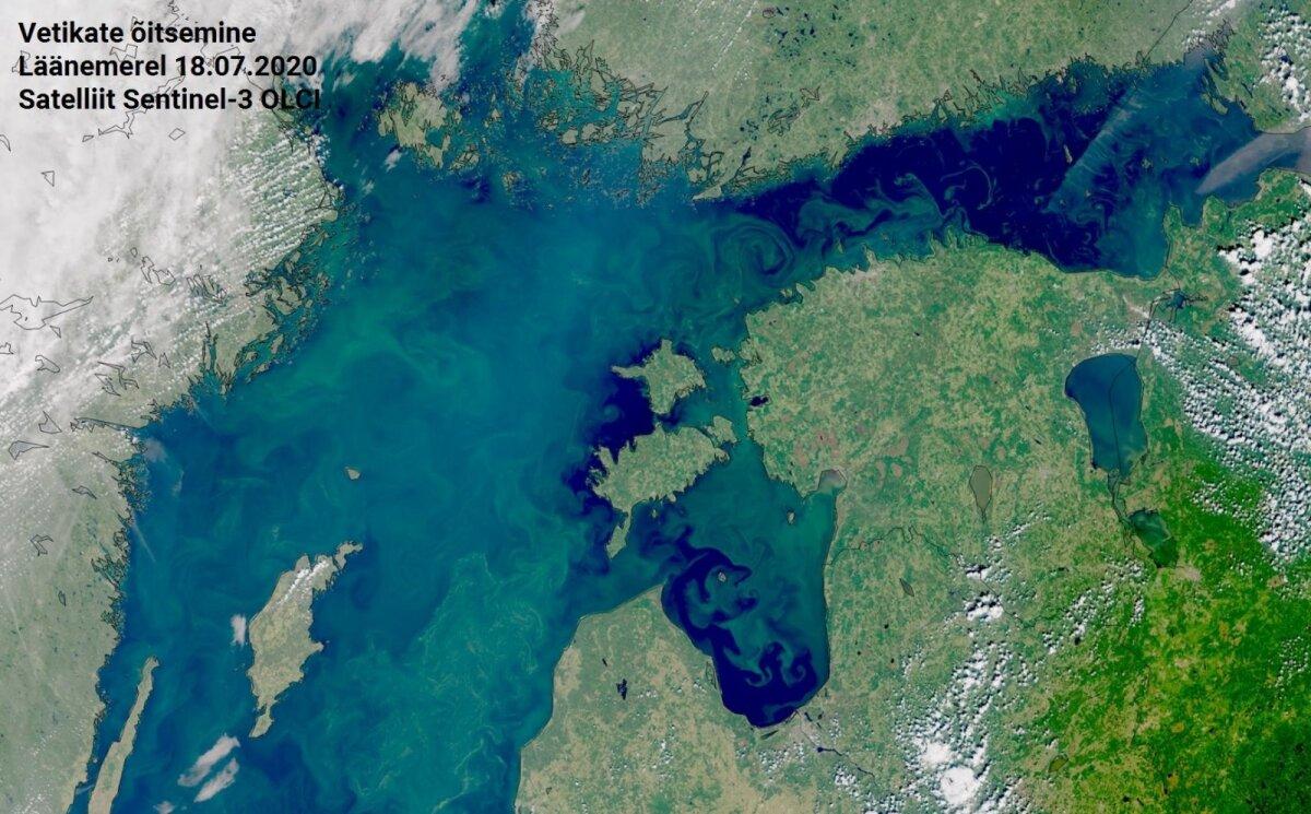 Vetikate õitsemine Läänemerel 18.07.2020