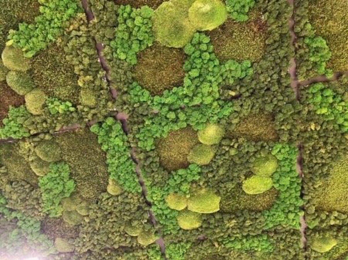 Sambane lagi loodusest inspireeritud rohenurgas.