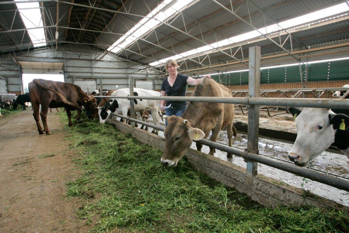 Veel kümmekond aastat tagasi oli Anne Kullamägi lootusrikas, uude lauta plaaniti tuua robotid ja karja veelgi laiendada.