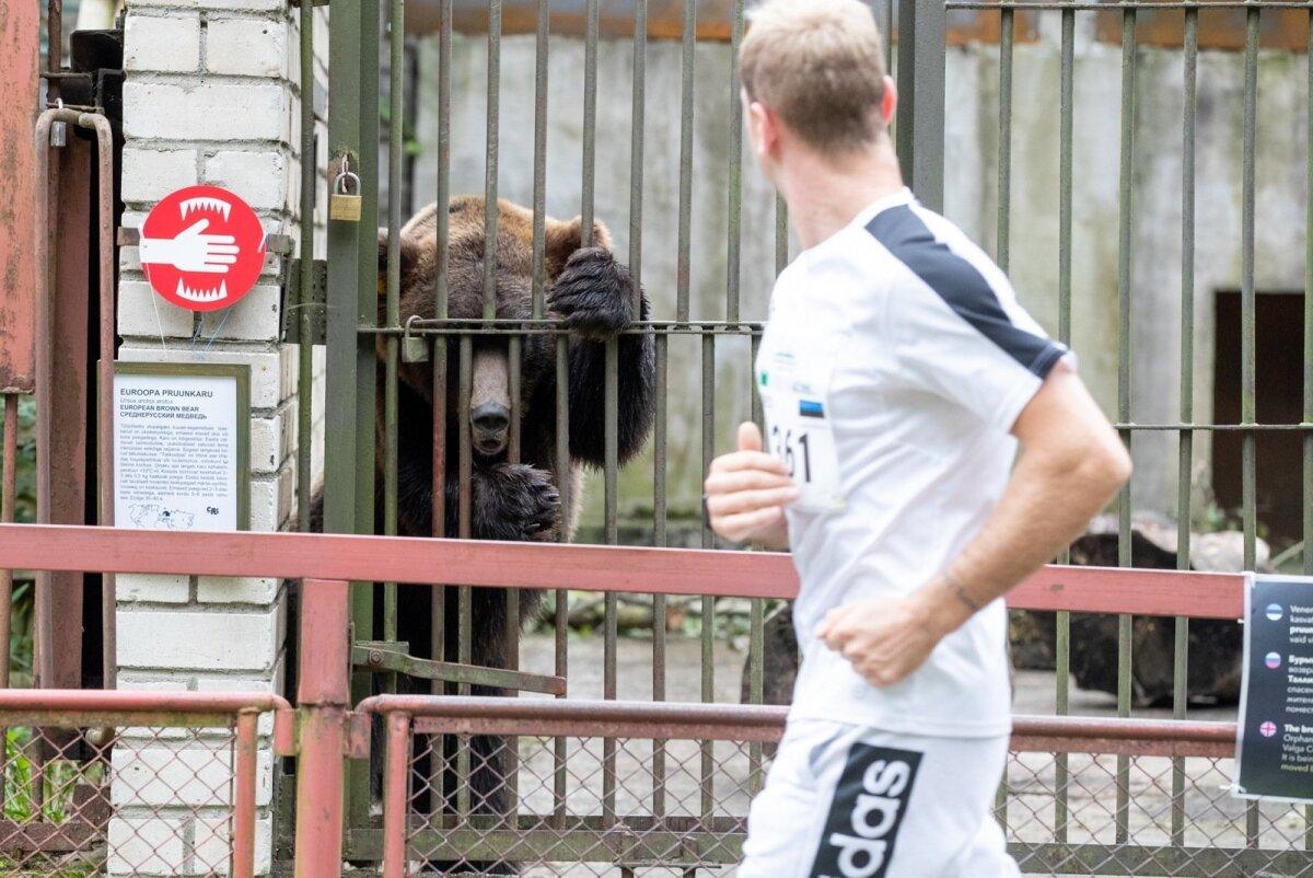 """""""Kuku!"""" Tallinna Maraton läbis tänavu esimest korda Tallinna loomaaeda."""