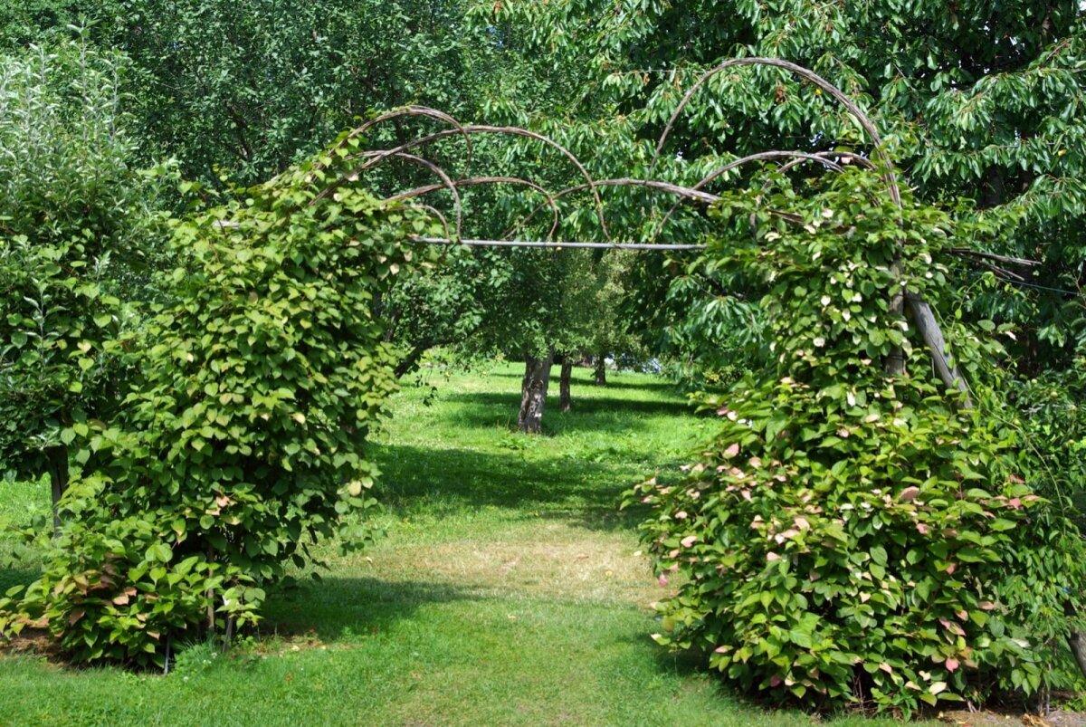 Väikese eralduse ilu- ja viljapuuaia vahele annab puidust ja vitstest meisterdatud lai värav, millel kasvab ronitaim aktiniidia.