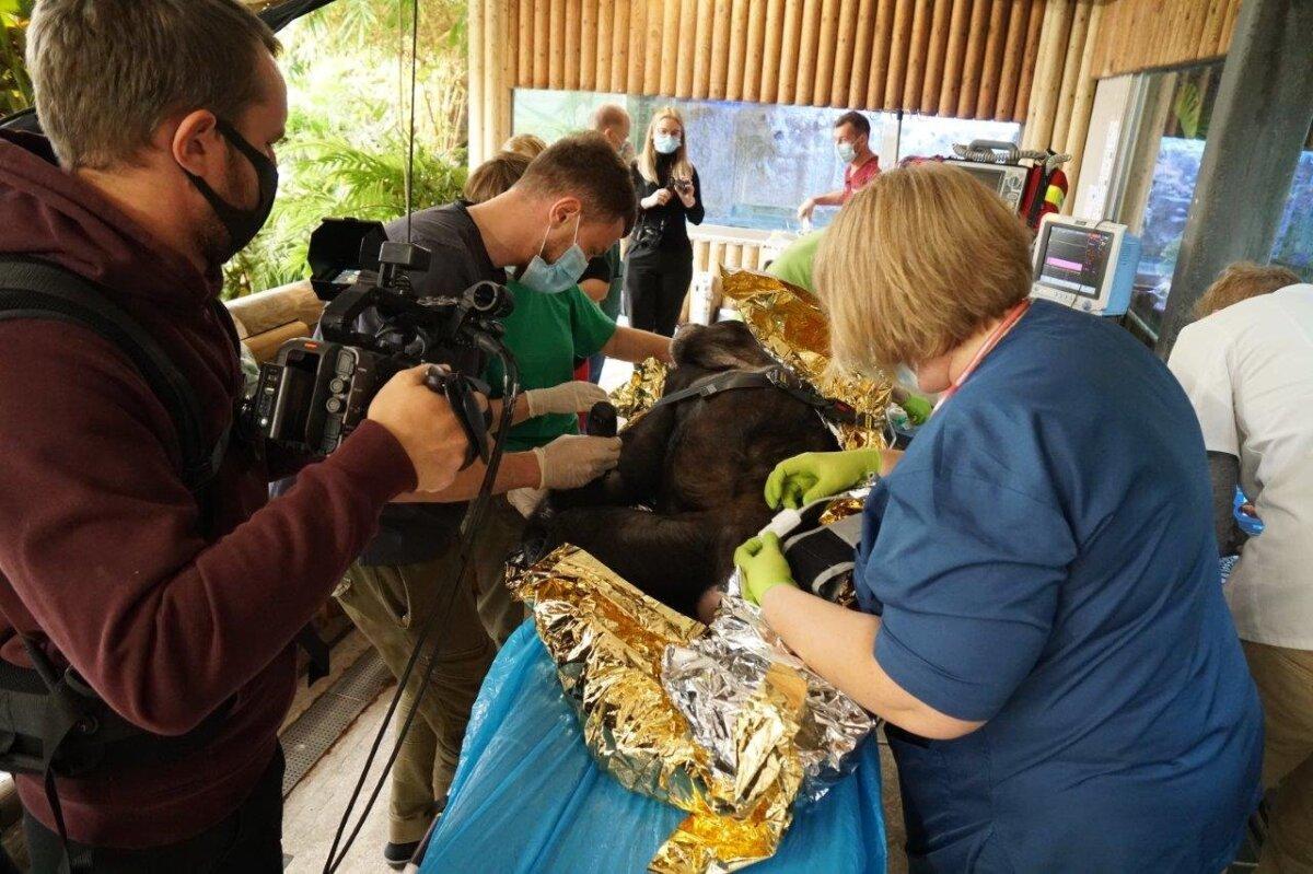 Šimpansid tervisekontrollis