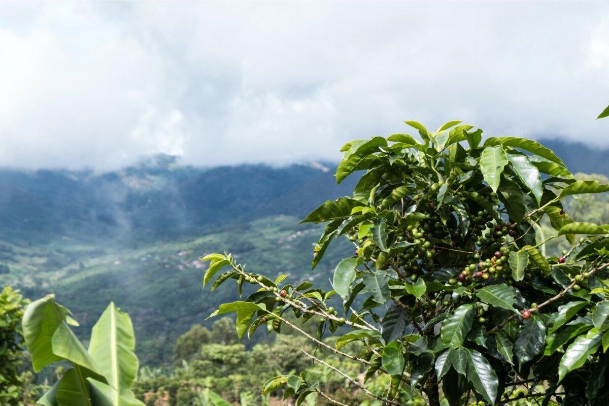 Costa Rica Kohvireis