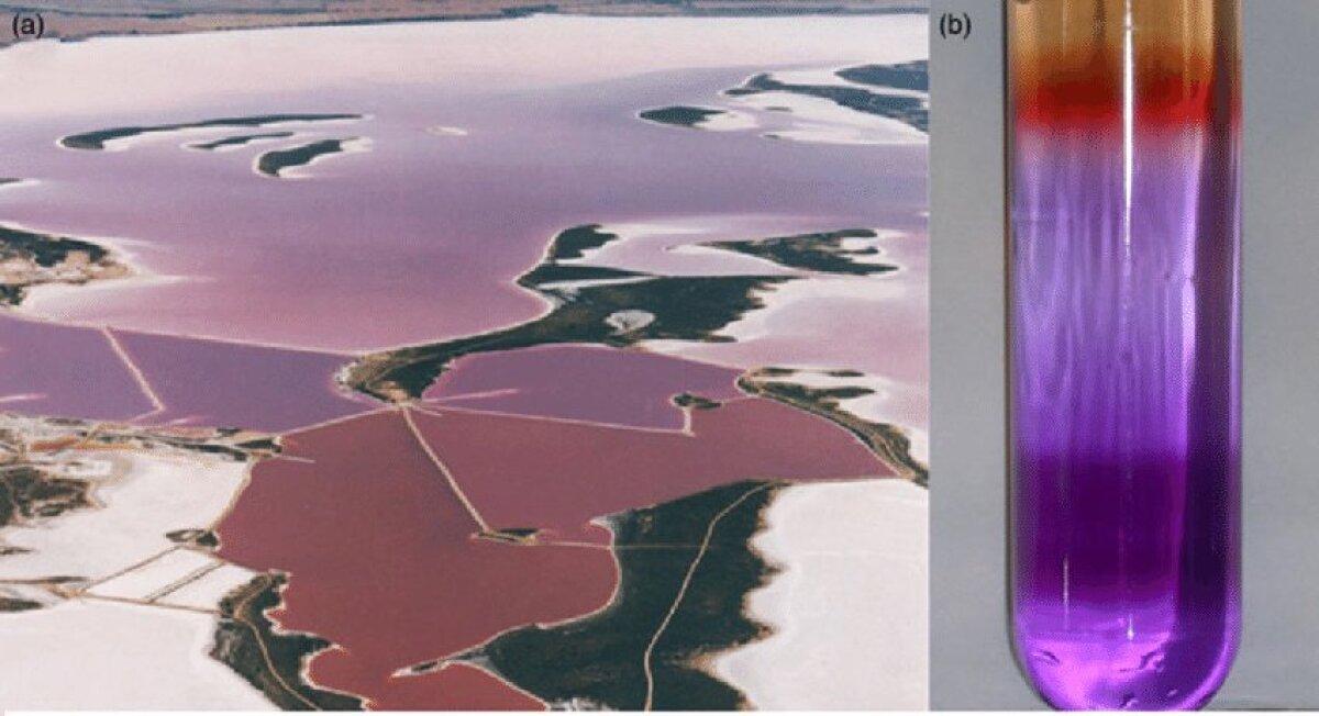 Lilla maa võis välja näha selline (foto: researchgate.net)