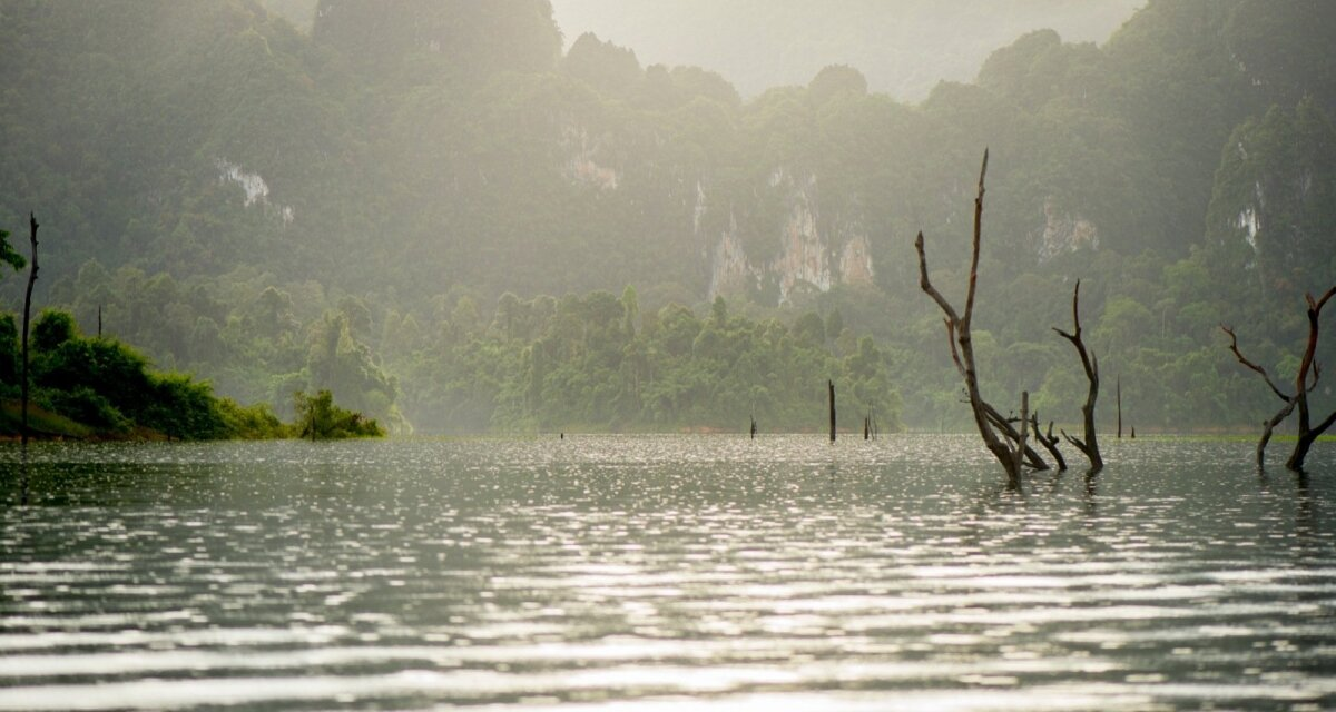 Keset järve välja turritavad kuivanud puud on mälestus kunagisest vihmametsast.