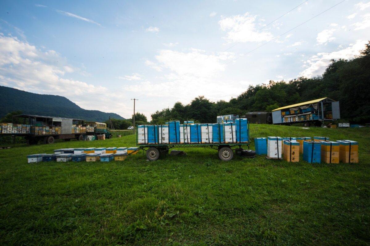 Oma tarudega rändavad mesinikud on Kaukaasia mägedes tavapärane vaatepilt.