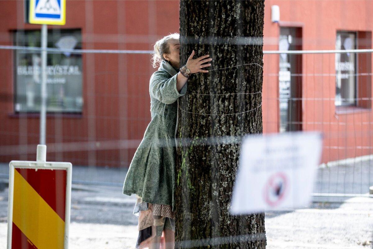 Kalli Suga jaoks olid Uue tänava puud nii olulised, et need said talt sooja kalli.