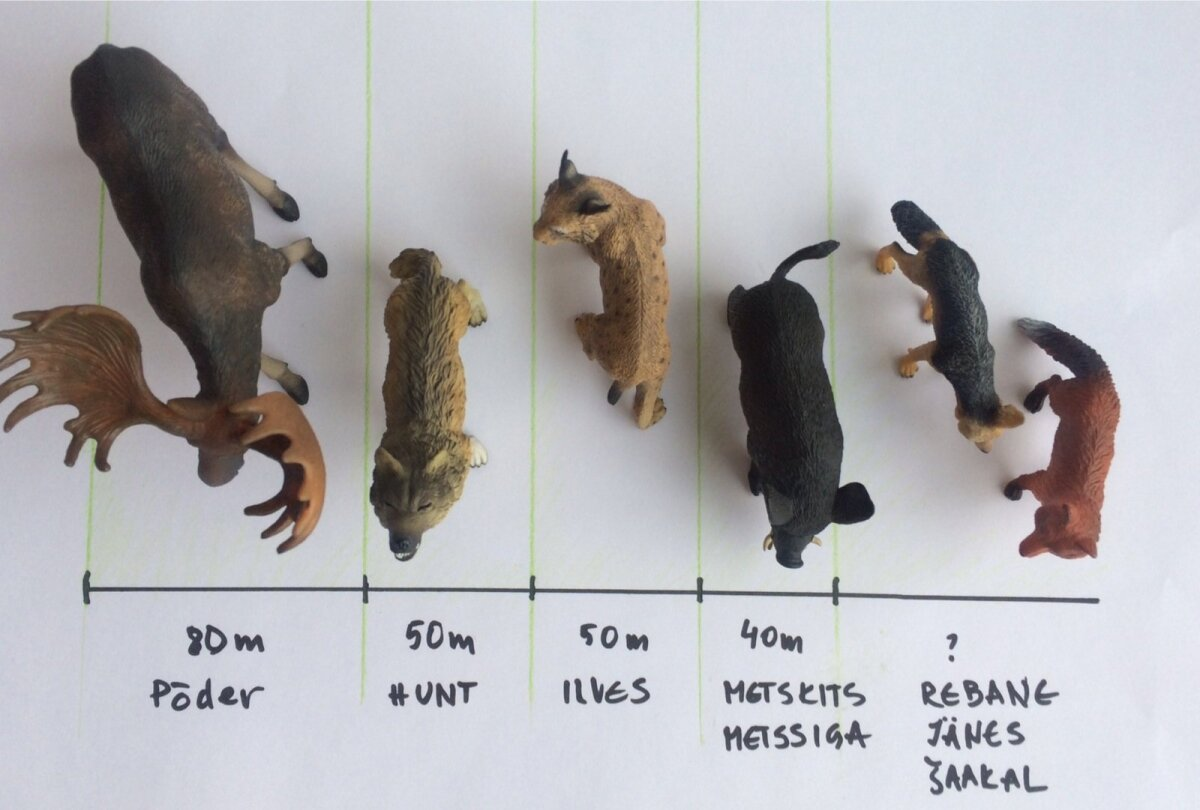 loomadkesed - test