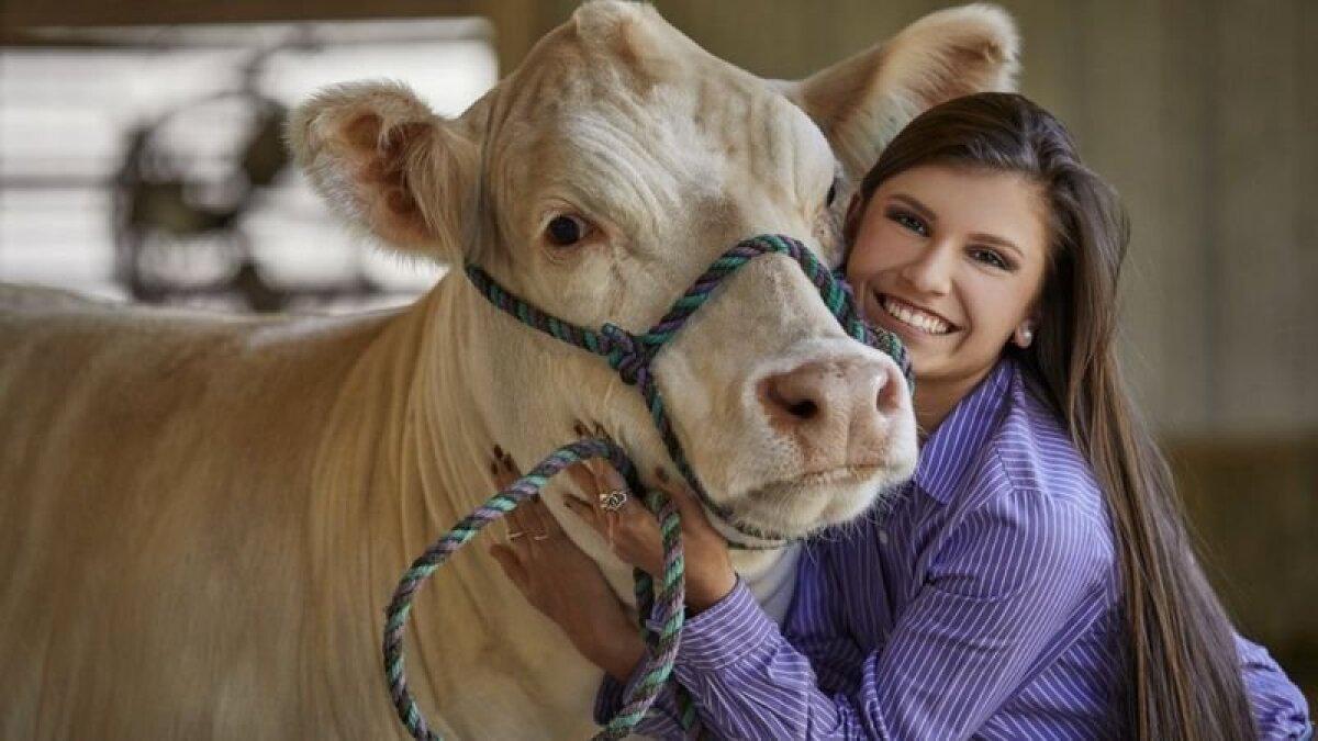 А когда корове надоест, она просто встанет и уйдет