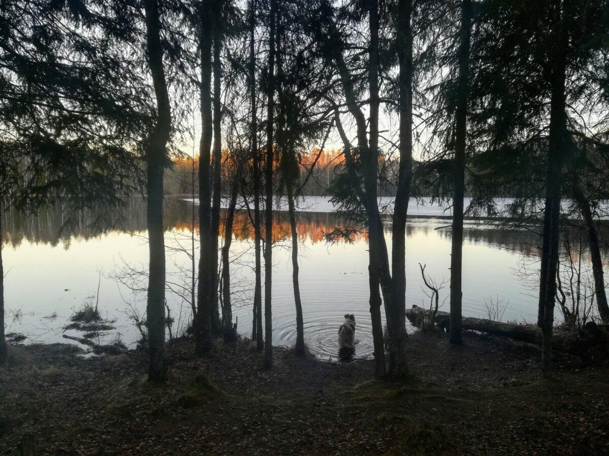 Jalutuskäik Jussi matkaradadel, mis lõppes kuuvalgel.