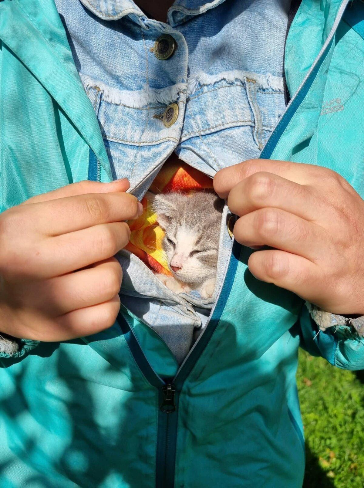 Rohuküla sadamast leitud kassipojad