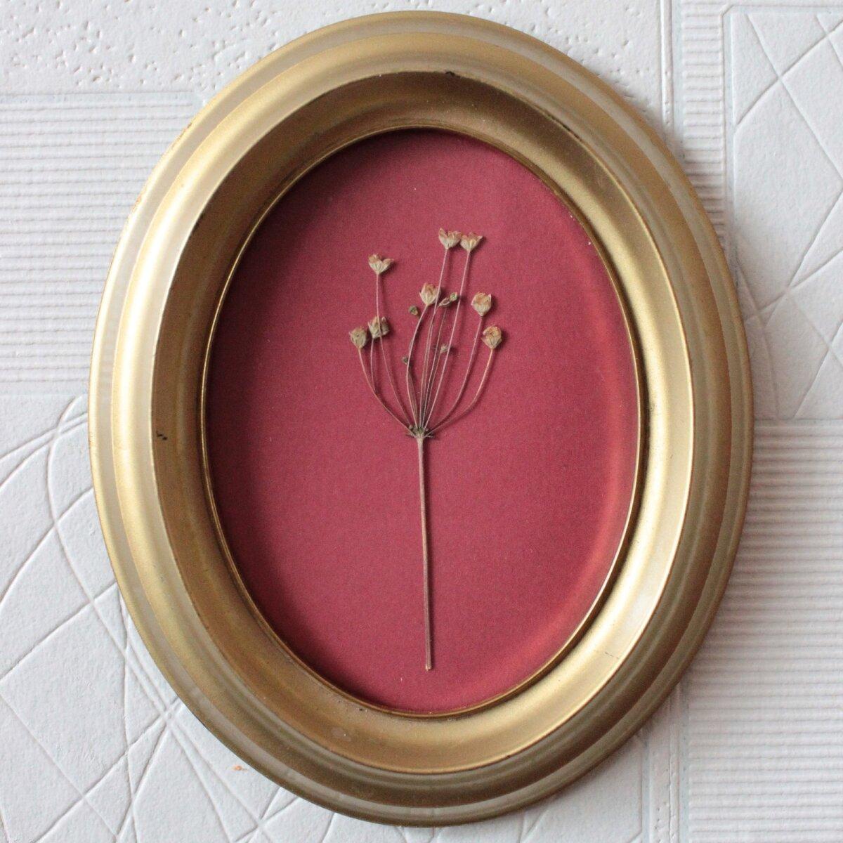 Kuivatatud taim raamis on omapärane kunstiteos, kuid ka kaunis mälestus.