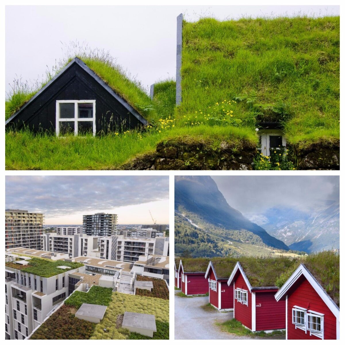 Üsna palju kohtab rohekatuseid Norras, aga ka maailma suurlinnades.