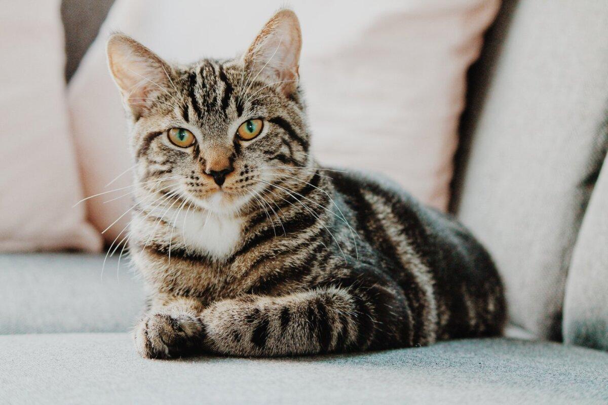 Kui kassi elukohaks saab korter, mis asub tihedast liiklusest ümbritsetud suures kortermajas, siis reeglina peab kass elama toas, sest õues on suur oht hukkuda