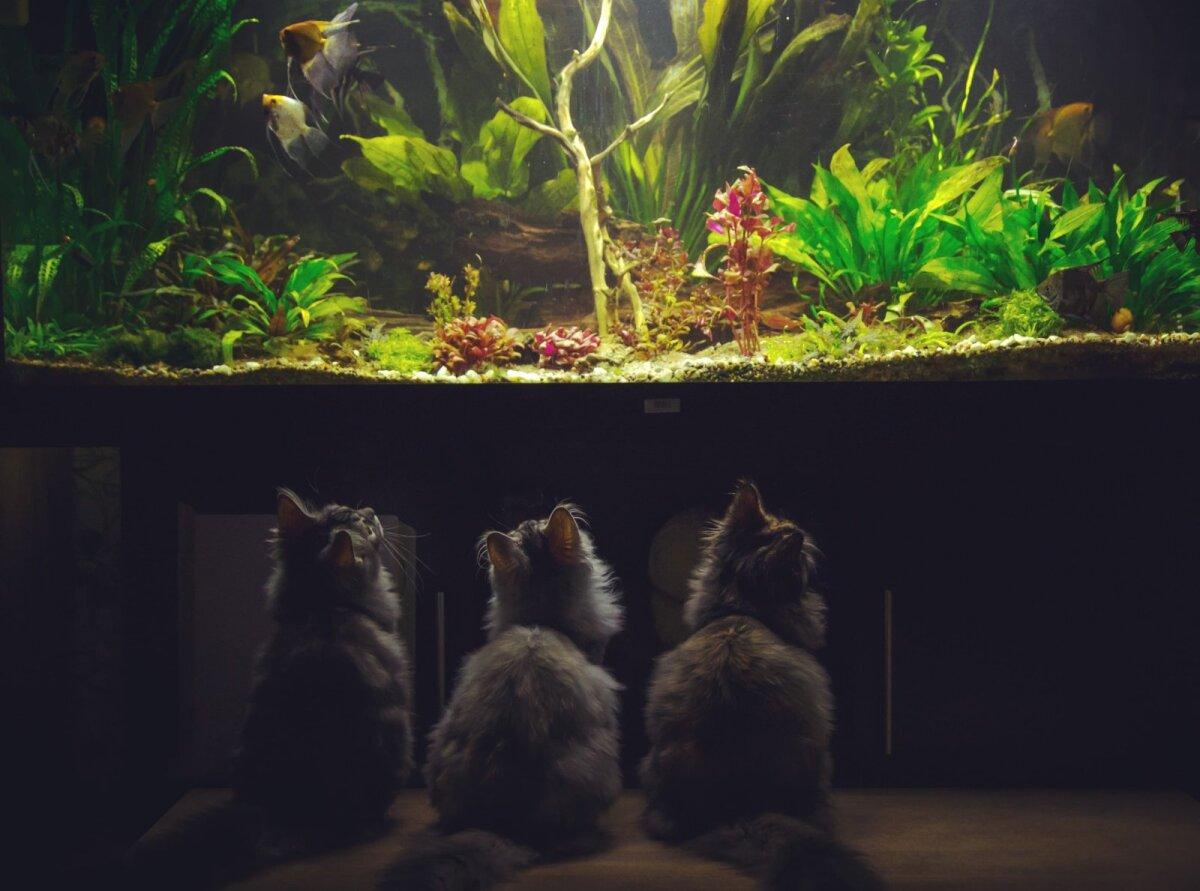 Virge kassid akvaariumi imetlemas