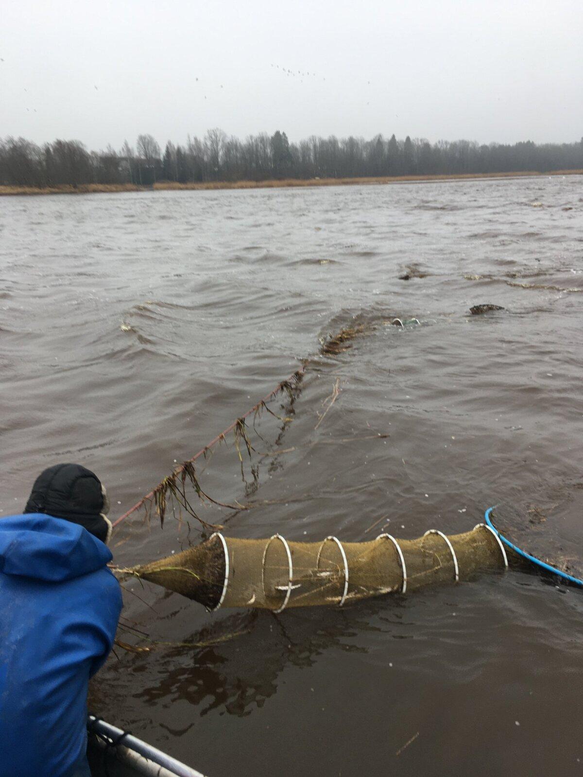 Meritindi püük rivimõrraga. Jõega paralleelselt olevale liinile kinnitatud rivimõrra saagikus võib ulatuda isegi mõnekümne kiloni, seda kala kuderände tipphetkedel, mis on aprilli esimestel nädalatel.